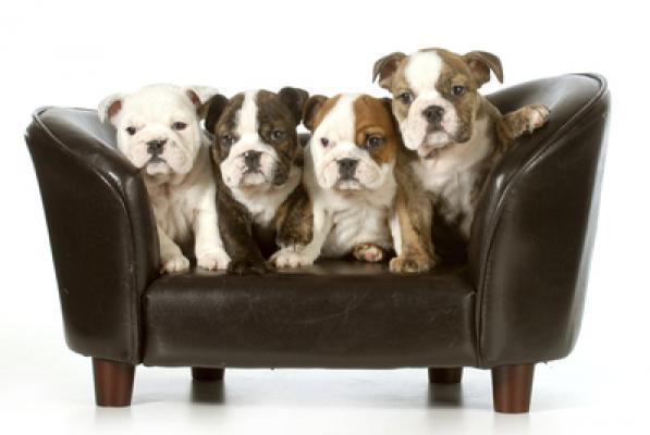 Canape Pour Chien Ikea Idees D Images A La Maison